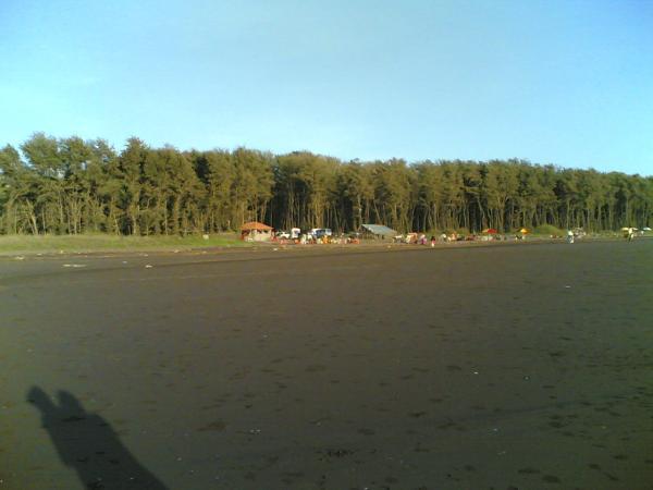 Aureg - Bracken